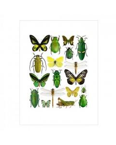 Liljebergs Plakat 30x40, Gule/Grønne Insekter
