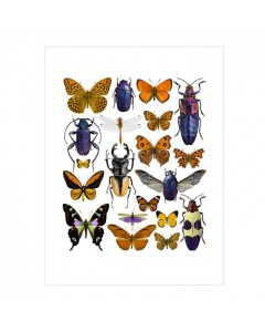 Liljebergs Plakat 30x40, Lilla/Orange Insekter