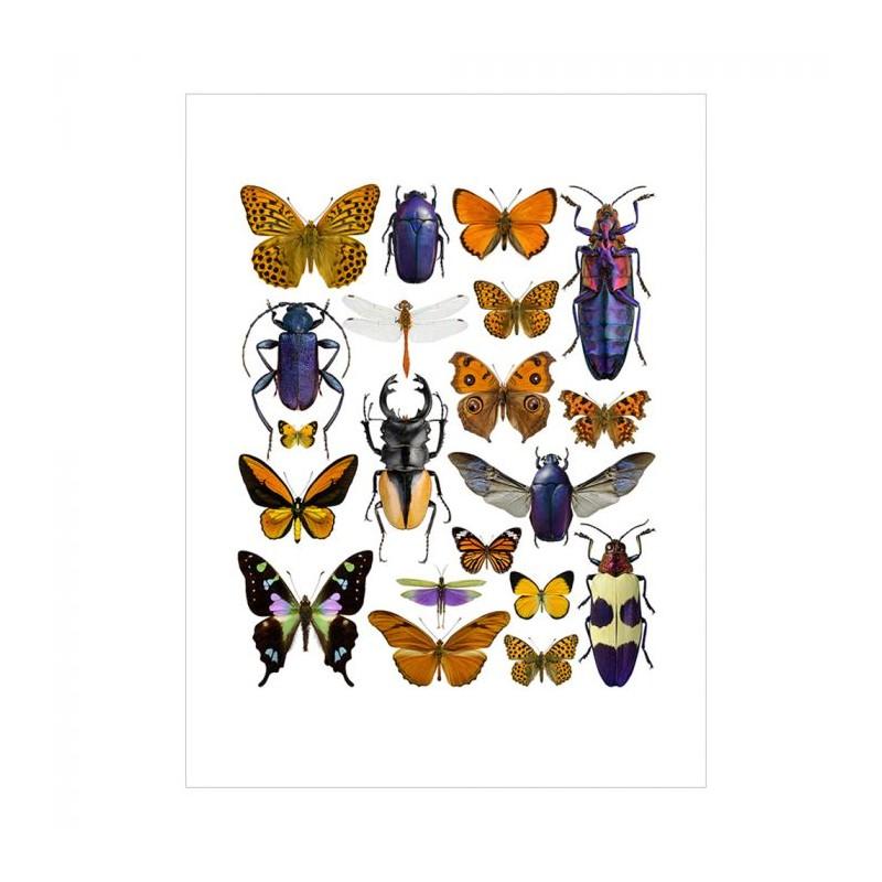 Image of   Liljebergs Plakat 30x40, Lilla/Orange Insekter