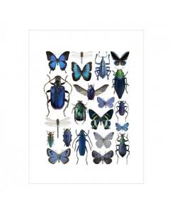 Liljebergs Plakat 30x40, Blå Insekter