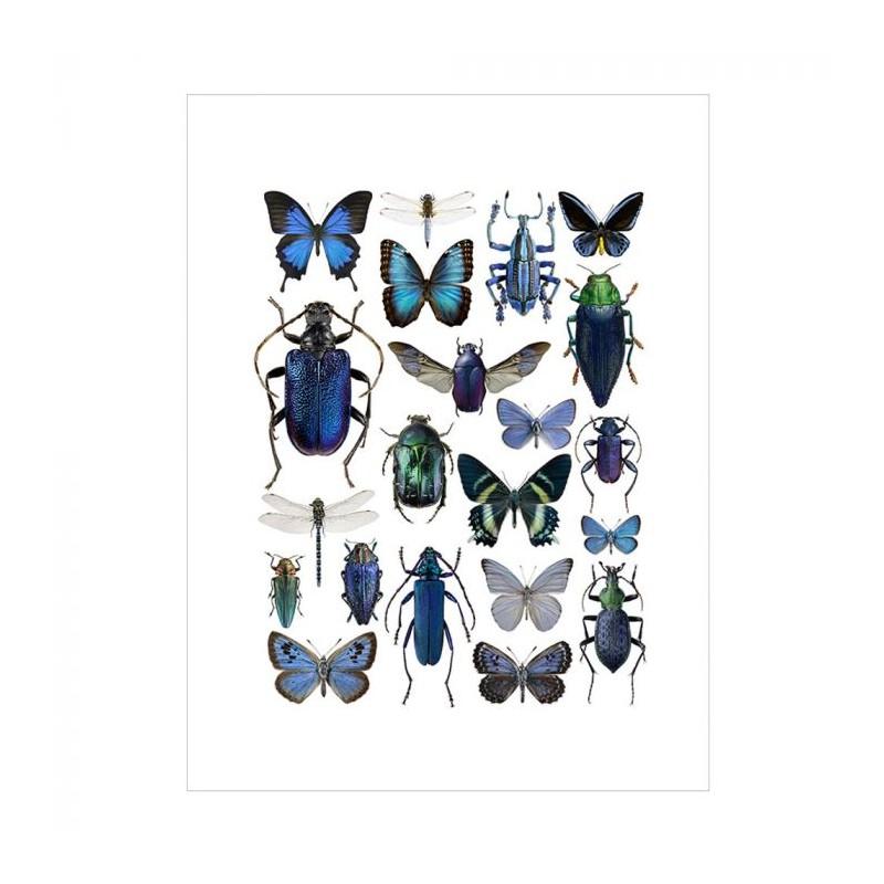 Image of   Liljebergs Plakat 30x40, Blå Insekter