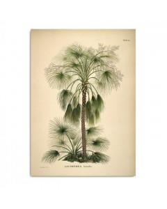 The Dybdahl Co. Plakat 30x40, Livistona Humilis Palme